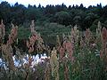Вечерняя трава